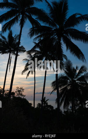 Silhouette of tropical landscape - palm trees on sunset skies and sea - Stock Image