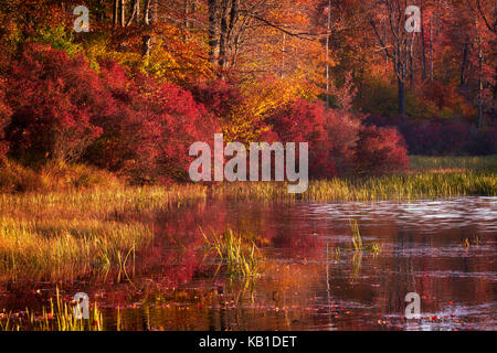 Colorful autumn foliage at sunrise along the shores of Lake Jean in Ricketts Glen State Park - Stock Image