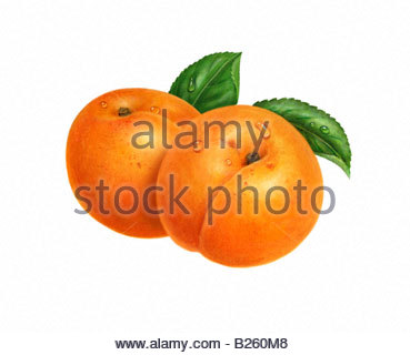 Apricots Two Whole - Stock Image