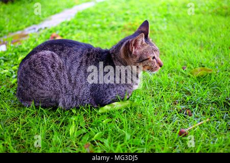 Cat Laying Down in Garden. - Stock Image