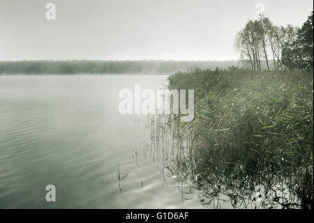 Morning mist at the lake in cold autumn weather, nature landscape in cloudy and foggy day in Poland, Europe. Reeds - Stock Image