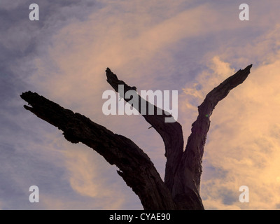 tree branch - Stock Image