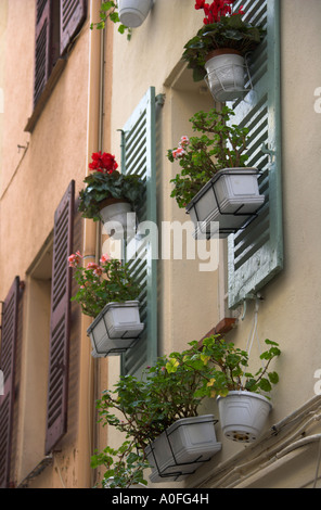 Windows and Flowerpots in Antibes, Cote d'Azure, South of France - Stock Image