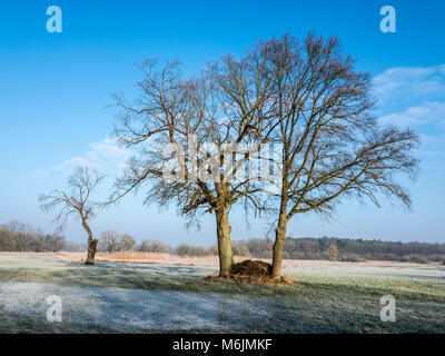 Trees on a frozen meadow at the Aller cycle path, river Aller ,  between Celle and Altencelle, Germany - Stock Image