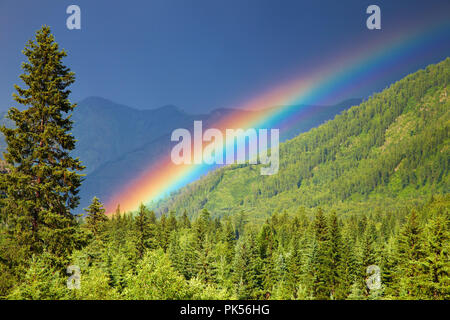 Rainbow over forest at sunset - Stock Image