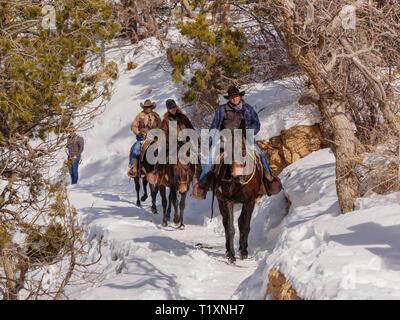 Mule wranglers, Grand Canyon National Park, Arizona. - Stock Image