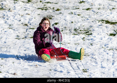 Chippenham, Wiltshire, UK. 2nd February, 2019. A girl enjoying the snow before it thaws is pictured in a local park in Chippenham as she slides down a hill on a sledge. Credit: Lynchpics/Alamy Live News - Stock Image