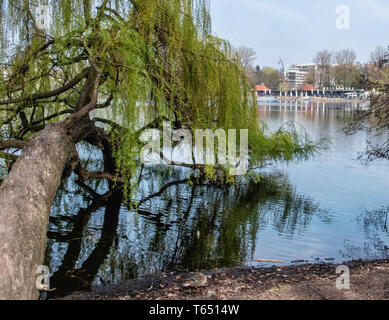 Berlin,Pankow. Weissensee, White Lake. Willow tree,tranquil water & reflections - Stock Image