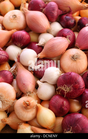 Variety of onions and shallots - Stock Image