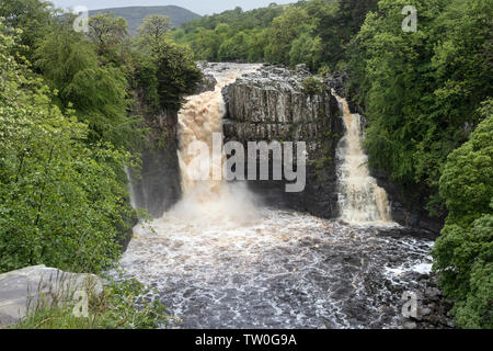 High Force in Spate, Upper Teesdale, County Durham UK - Stock Image