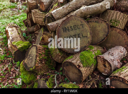 Pile of logs left as an Insect Hotel - Stock Image