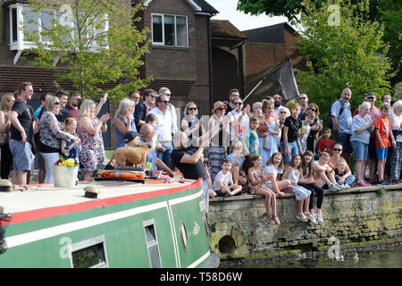 Annual Easter duck race, ran by the Old Barge on the Lee Navigation canal in Hertford, UK - Stock Image