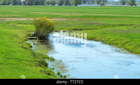 Biotope on the Elbe - National Park on the Elbe - Stock Image