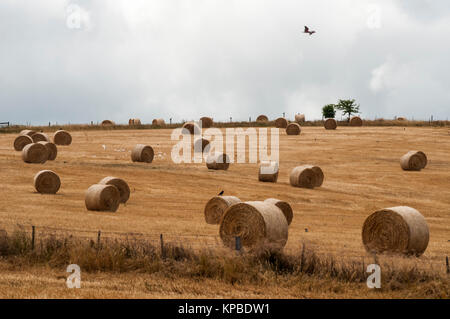 Hay bales lie strewn across a paddock in the Central Highlands region of Victoria, Australia - Stock Image