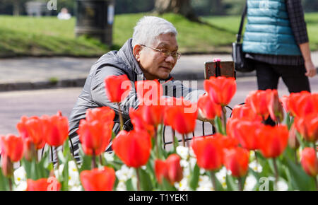 Bath, Somerset, UK, 29th March, 2019. A man is pictured using his mobile phone to take a photograph of colourful Tulips in Royal Victoria Park. Credit:  Lynchpics/Alamy Live News - Stock Image