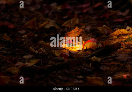 Sun spotlight on a bed of autumn leaves. - Stock Image