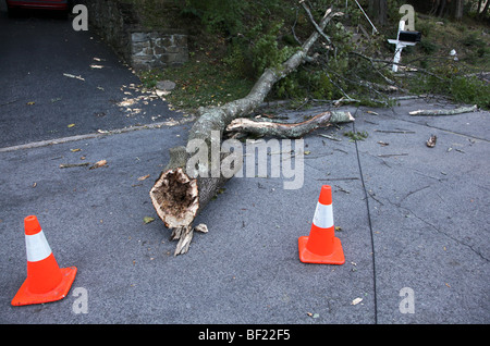 Large tree branch and downed wire resting on street after early autumn storm, Dobbs Ferry, NY, USA - Stock Image