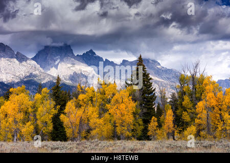 Autumn at Grand Teton National Park, Wyoming, USA - Stock Image