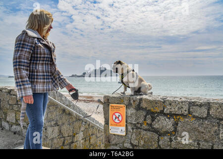 Dog sitting on wall above No dogs on beach sign in front of St Michaels Mount - Stock Image