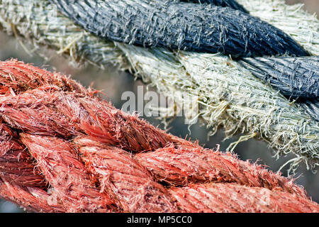 Mooring ropes in contrasting colours under strain on Scarborough's harbour dockside. - Stock Image