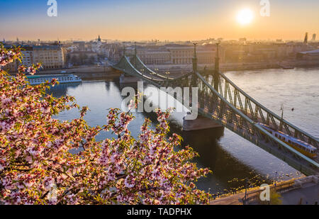 Budapest, Hungary - Beautiful Cherry Blossom at sunrise with Liberty Bridge and traditional tram at background on a sunny morning. Spring has arrived  - Stock Image