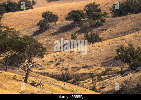 Dry countryside out in Cowra shire, Central West New south wales, Australia. - Stock Image