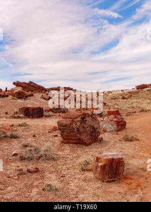 Petrified logs, Emerald Forest. Petrified Forest National Park, Arizona. - Stock Image