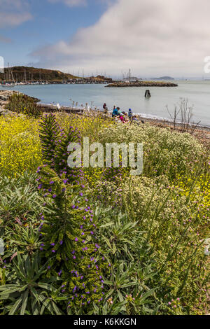 flora, vegetation, people, family, tourists, visitors, Fort Baker, city of Sausalito, Marin County, California, United States, North America - Stock Image