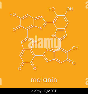 Melanin (eumelanin), proposed oligomeric structure model. Primary determinant of skin color. Skeletal formula. - Stock Image