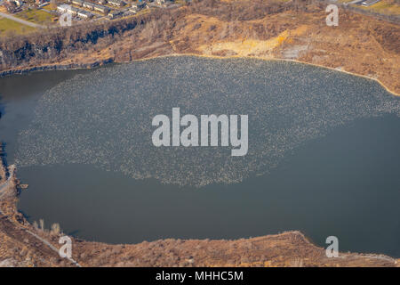 Aerial View Of Birds - Stock Image