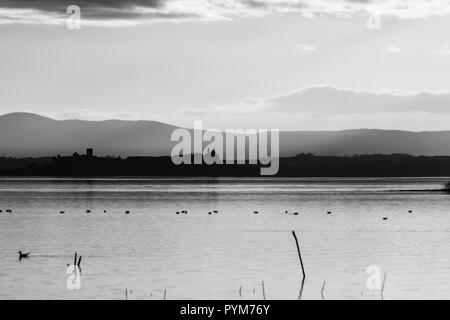Beautiful view of Trasimeno lake at sunset with birds on water, trees and Castiglione del Lago town in the background - Stock Image