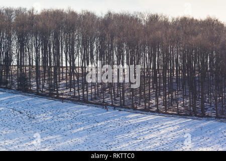 Walkers descend past hilltop beech woods in the Chilterns with a covering of snow near Fingest, Buckinghamshire. - Stock Image