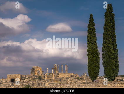 Large cypress trees in the foreground of the ancient Roman archeological ruins of Volubilis, with marble pillars and columns. Morocco. - Stock Image