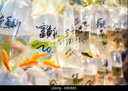 Tropical fish for sale at Hong Kong's Tung Choi Street goldfish market, Mong Kok, Hong Kong - Stock Image
