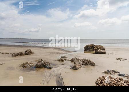 Jekyll Island Georgia Rocky Driftwood Beach - Stock Image
