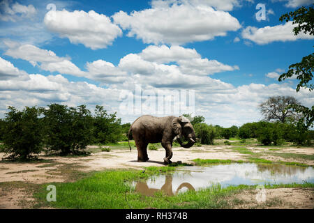 Elephant at water - Stock Image