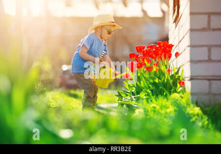 Little child walking near tulips on the flower bed in beautiful spring day - Stock Image