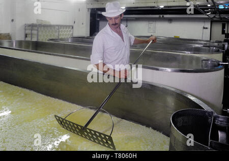 Cutting the curds at the Long Clawson Dairy, Long Clawson, Melton Mowbray, Leicestershire - Stock Image
