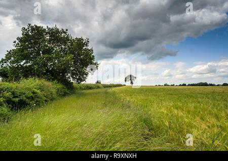 Summer Countryside - Stock Image