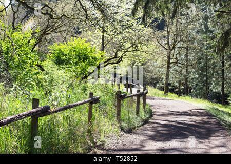 Oak grove trail at the Oregon Garden in Silverton, Oregon, USA. - Stock Image