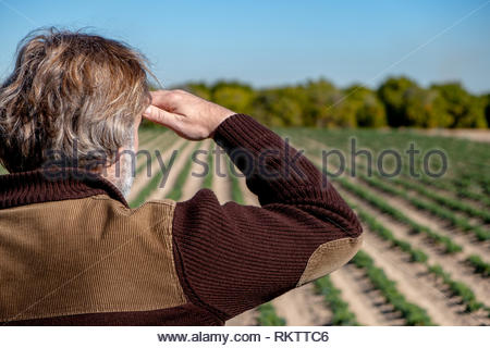 Rear view of a farmer observing his crops - Stock Image