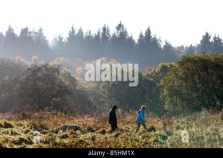 Autumn arrives A cold and frosty morning in Mugdock country park - Stock Image