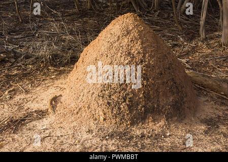 Large termite mound in wilderness on Kangaroo Island in South Australia, Australia. - Stock Image