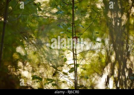 Blätter und Äste im Sonnenlicht, Hintergrund unscharf - Stock Image