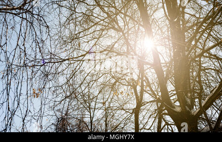 Warm golden winter sunlight filters through the branches of a wintry forest with branches covered in snow. Copyspace area for travel holiday ideas and - Stock Image