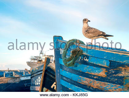 Morocco, Marrakesh-Safi (Marrakesh-Tensift-El Haouz) region, Essaouira. Fishing port at dawn. - Stock Image