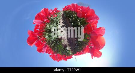 Tiny planet of beautiful flower field in Lisse, Keukenhof, the Netherlands - Stock Image