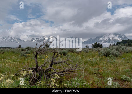 Dead Wood in Field in Front of Tetons with Swirling Clouds - Stock Image