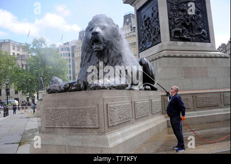 London, UK. 09th May, 2019. The world famous lions in Trafalgar Square get a pressure cleam. Credit: JOHNNY ARMSTEAD/Alamy Live News - Stock Image