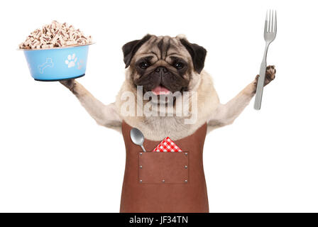 smiling pug dog wearing leather barbecue apron, holding up blue food bowl with kibble and fork, isolated on white - Stock Image